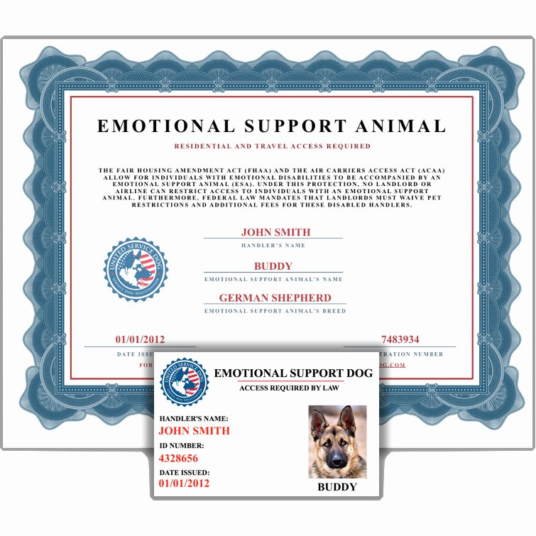 Service Dog Certificate Pdf Beautiful Emotional Support Animal Id Card Certificate