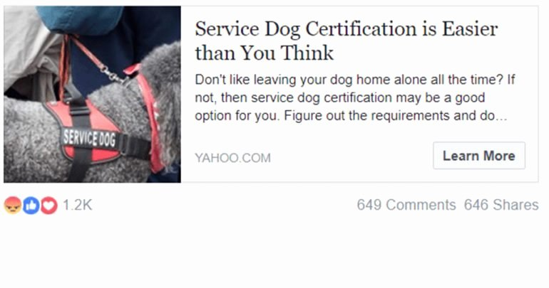 Service Dog Certificate Pdf Inspirational Yahoo Promotes Fake Service Dog Certification Sites