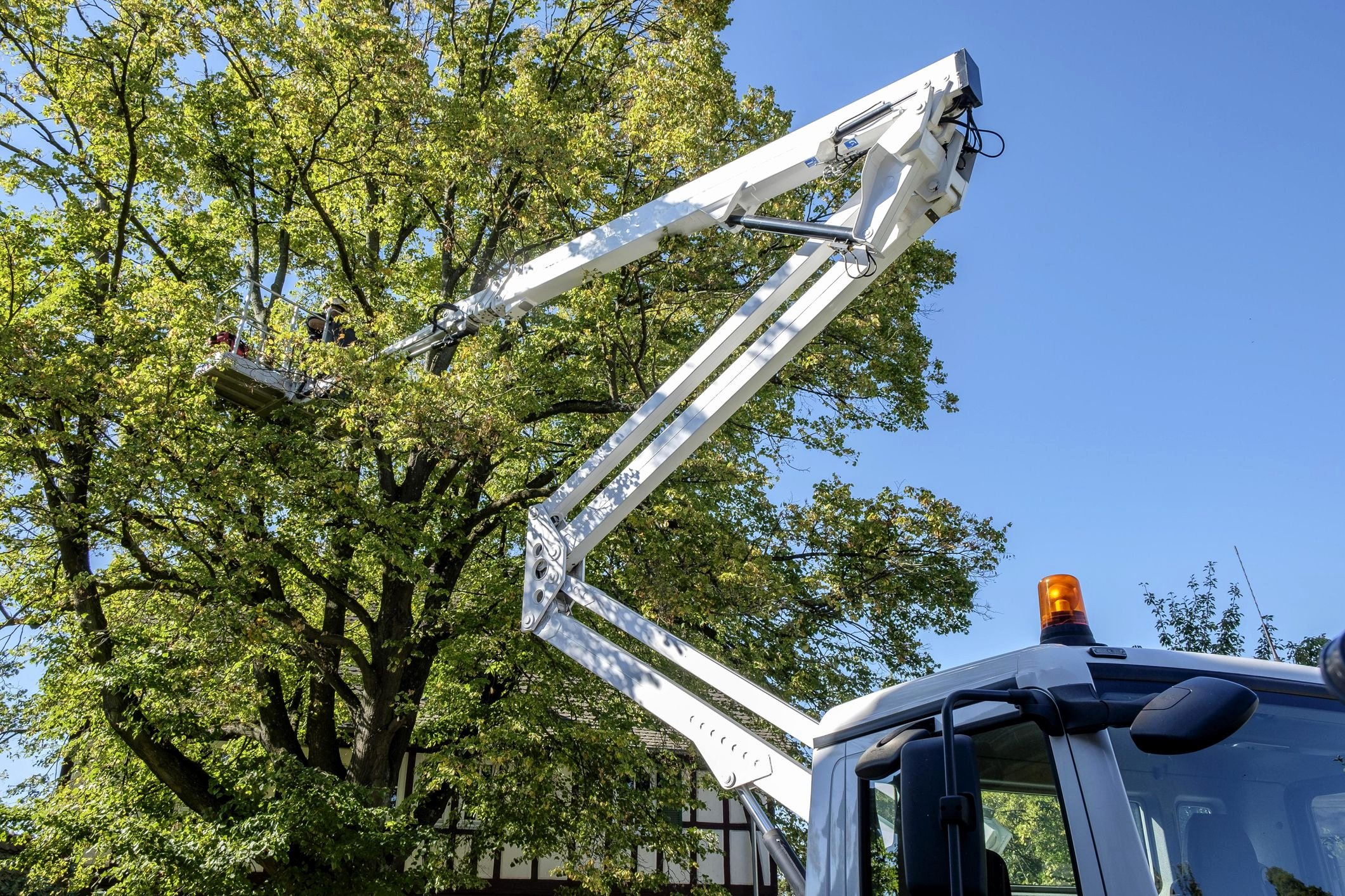 Tree Removal Contract Template Awesome A Sample Contract for Professional Tree Removal