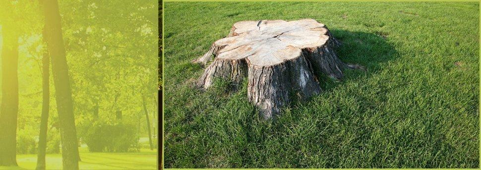 aardvark tree service estimate request form